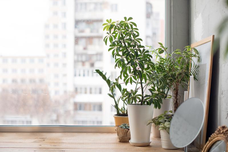 Zimski vrt na okenski polici