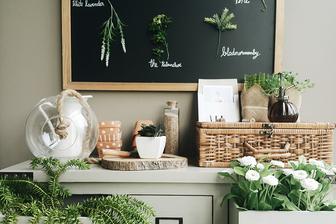Rastline v domu