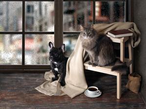 9 Korakov za pripravo doma pred prihodom pasjega ali mačjega mladička